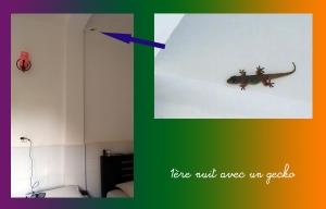 en-route-pour-le-monde-gecko
