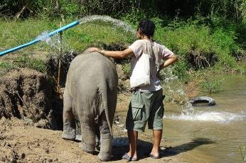 horizon-mix6t-elephant-retirement-park-noy-1