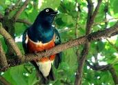 horizon-mix6t-bird-park1