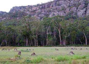 horizon-mix6t-kangaroos1