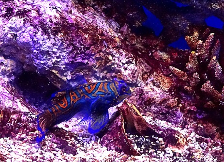 horizon-mix6t-kuala-lumpur-aquarium