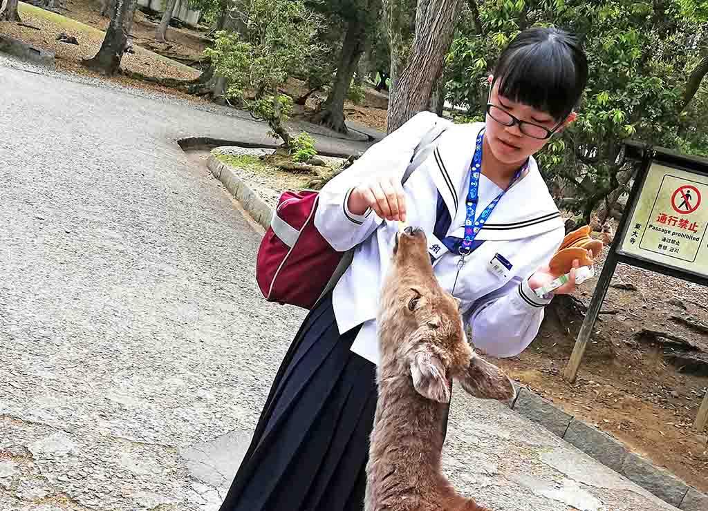 Parc de Nara, écolière nourrissant une biche