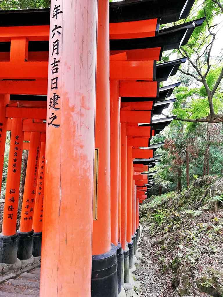Fushimi-Inari Taisha et ses torii