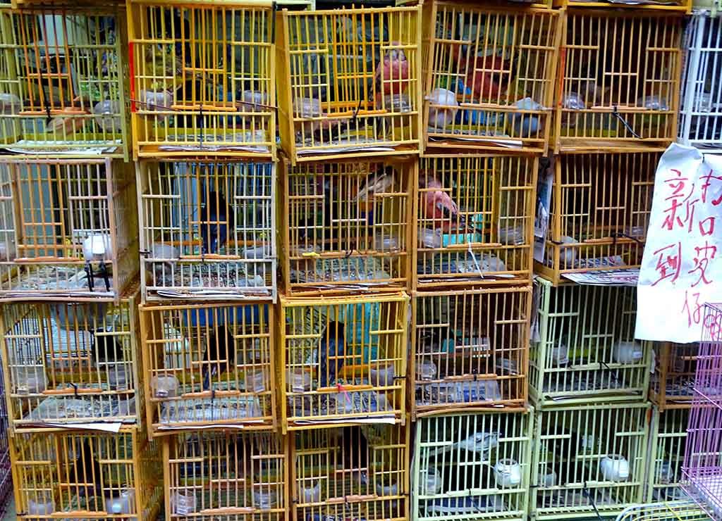 Hong-kong Marché aux oiseaux de Mong kok